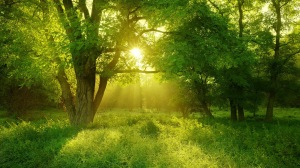 Green trees sunshine wallpaper