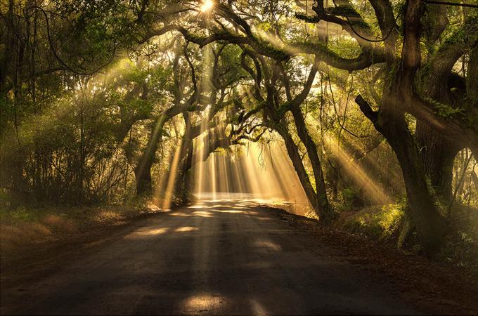 nature-photographs