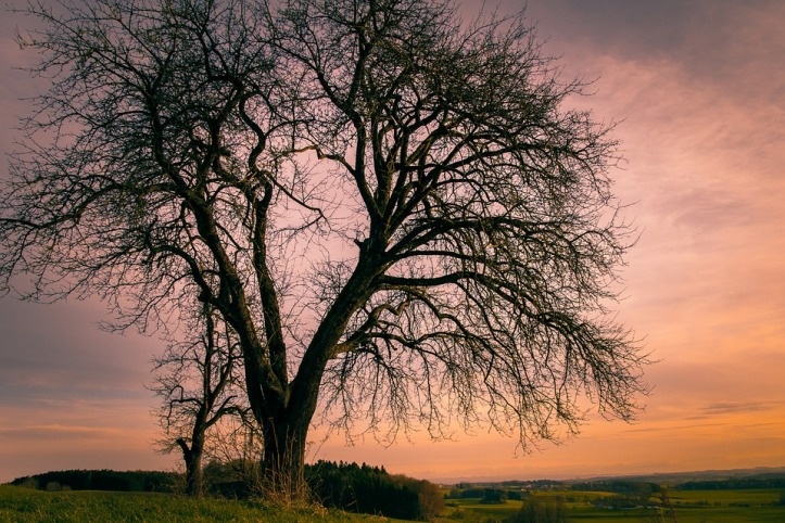 bare-tree-4066268_960_720